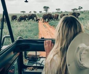 girl, travel, and elephant image