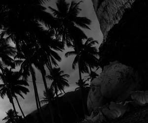 b&w, palms, and tumblr image