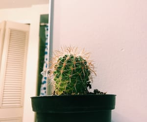 aesthetic, cactus, and plants image