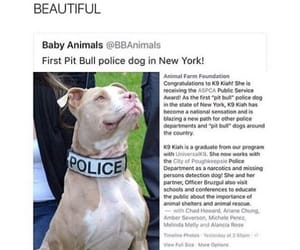 dog, pit bull, and cute image