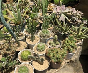aesthetic, ambiente, and cactus image