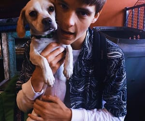 dog, coreyfogelmanis, and cute image