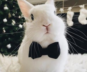 bunny and conejo image