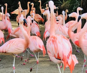 animals, flamingos, and birds image