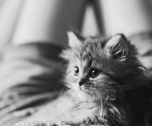 adorable, black and white, and sweet image