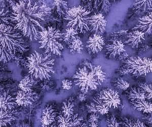 wallpaper, purple, and tree image