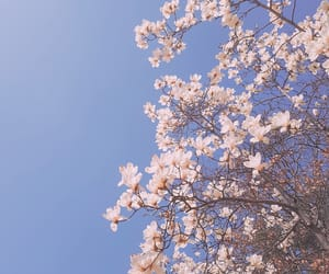 spring and magnolia image