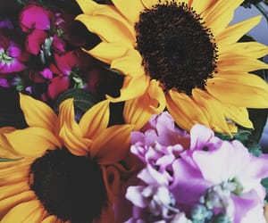 background, flowers, and girasol image