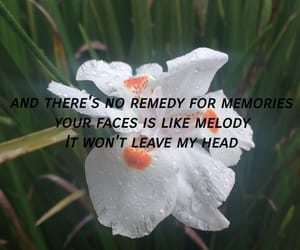 flower, music, and quote image