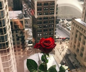 city and rose image