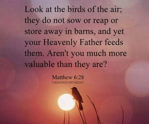birds and bible verse image