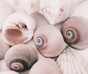 pink, shell, and theme image