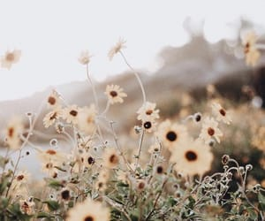 aesthetic, nature, and spring image