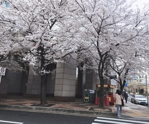 aesthetic, cherry blossom, and city image