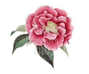 etsy, floral print, and flower illustration image