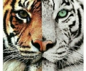 animals, cat, and white image