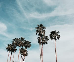 blue, california, and palm trees image