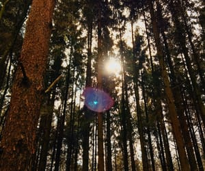 bokeh, day, and forest image