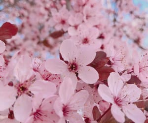 aesthetic, background, and flowers image