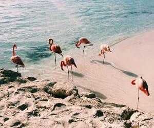 beach, flamingo, and tropical image