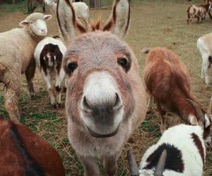 animals, donkey, and nature image