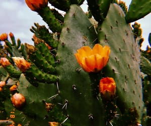 cactus, flower, and nature image
