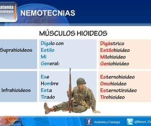 medicina, musculos, and nemotecnias image