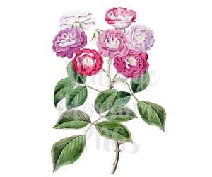 etsy, flower, and flower illustration image