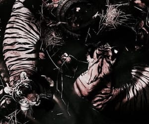 animal, theme, and tiger image