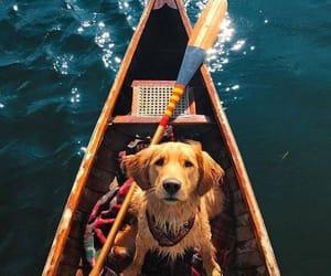 beautiful, dog, and ocean image