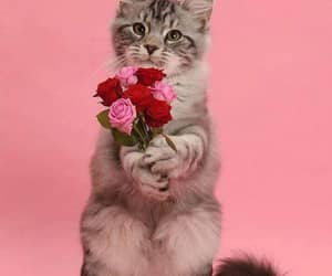 adorable, kittie, and beautiful image