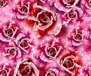 abstract, roses, and abstract art image