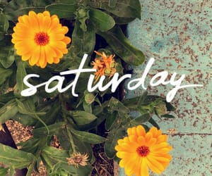 flowers, saturday, and spring image