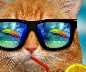cat, cute, and summer image