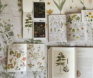 book, flowers, and art image