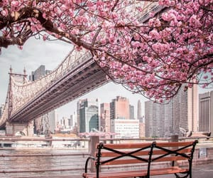 city, nyc, and spring image