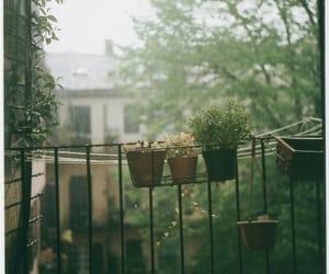 flowers, nature, and rain image
