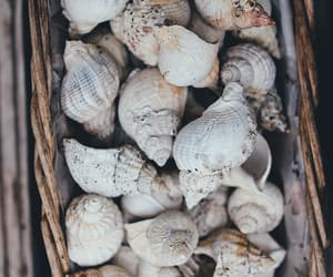 shells, summer, and ocean image