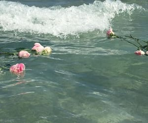 rose, flowers, and ocean image