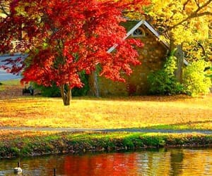 autumn, yellow, and beauty image