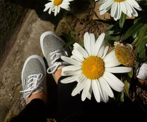 flores, flower, and vans image