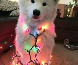 dog, husky, and light image