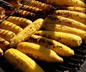 corn, farm, and food image