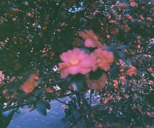 flower, filmcamera, and filmphotography image