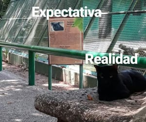 funny, Gatos, and gracioso image