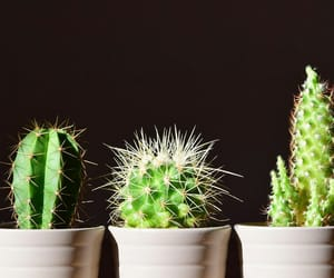 cute cactus green plants image