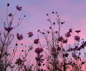 flowers, purple, and sky image