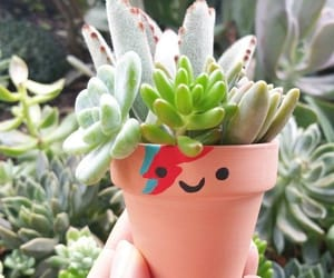 plants, succulents, and love image