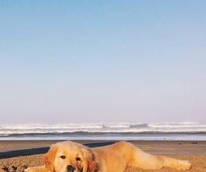 dog, beach, and cute image