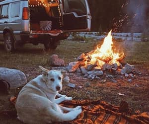 camp, dog, and adventure image